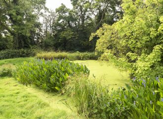 What do you love about green space?