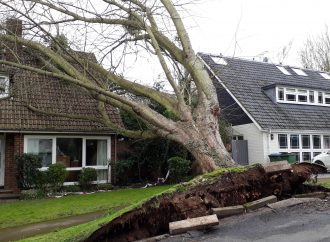 Tree falls on home in Storm Ciara