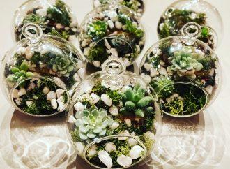 Make a stunning mini garden