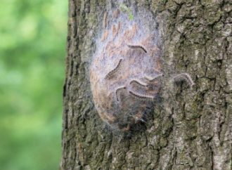 Harmful tree pest spotted in nature reserves