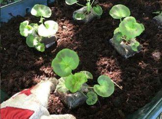 Plants stolen from pocket park