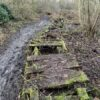 New boardwalk to help restore biodiversity at Six Acre Meadow