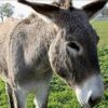 Donkey is special guest at St Mark's Palm Sunday service