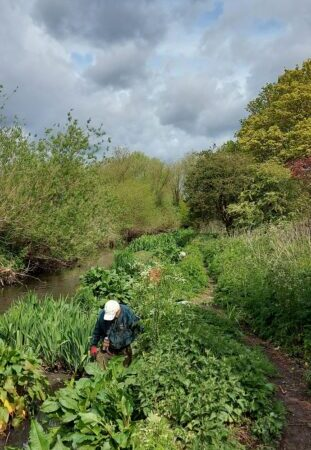 Take part in planting project to aid reintroduction of water voles