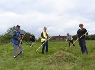 Grass in nature reserve is cut using scythes to manage meadow
